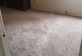 Pet Stain Removal Near Oakwood CA