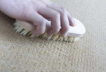 Who Should You Blame For Premature Aging Of Your Carpet | Venice, CA