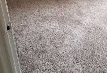 Pet Stain Carpet Cleaner - Oakwood